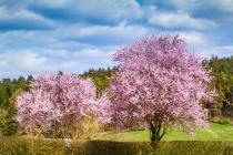 Frühlings ganze Pracht